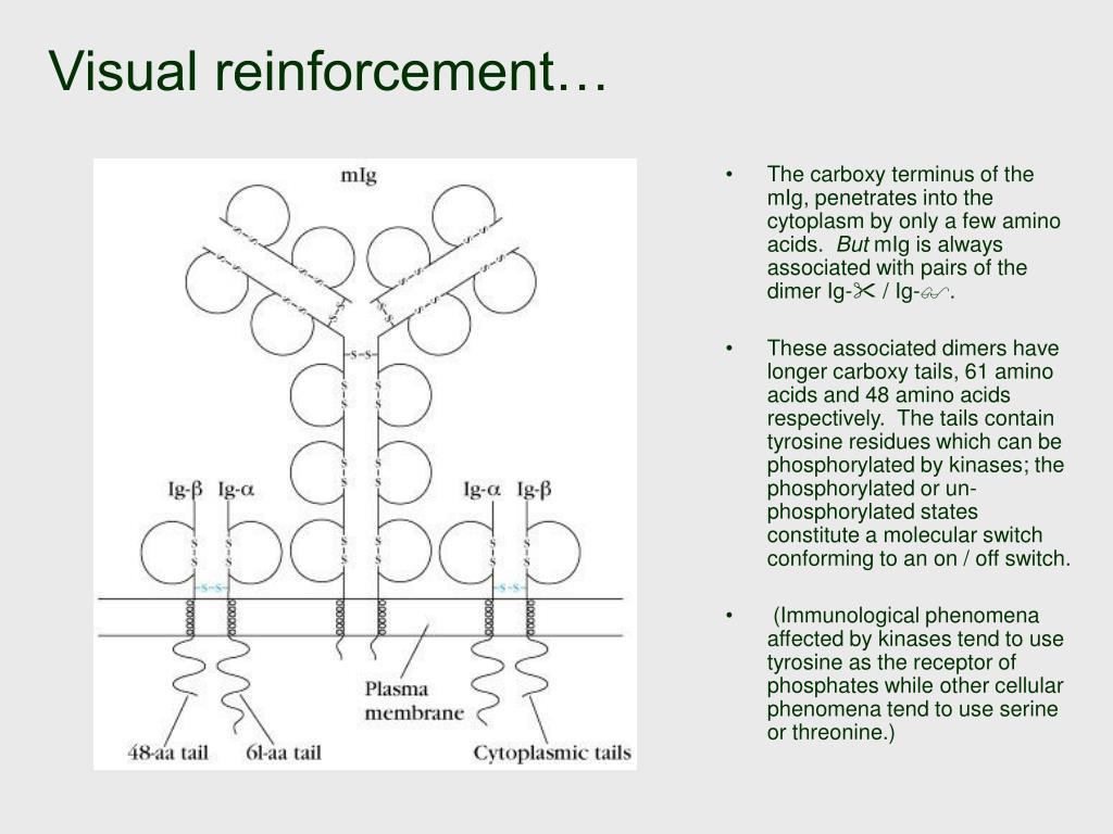 Visual reinforcement…
