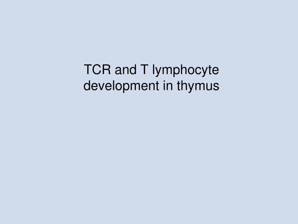tcr and t lymphocyte development in thymus l.