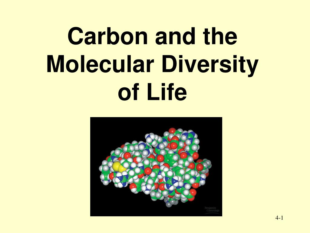 carbon and the molecular diversity of life l.
