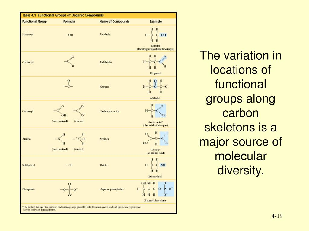 The variation in locations of functional groups along carbon skeletons is a major source of molecular diversity.