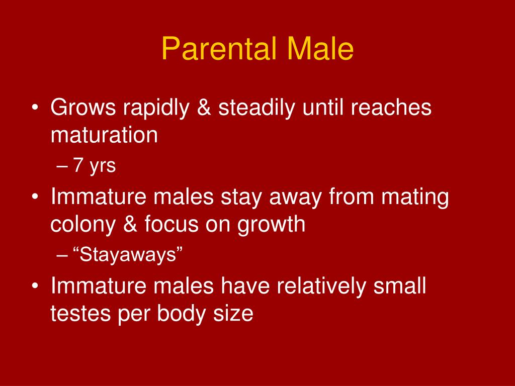 Parental Male