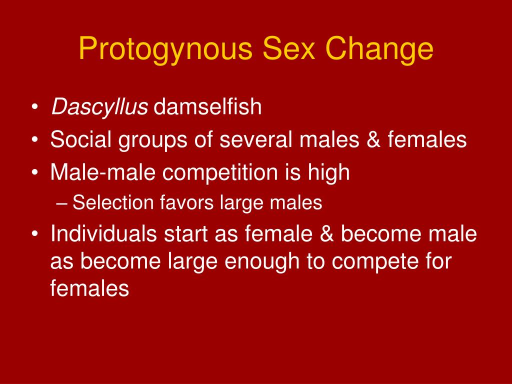 Protogynous Sex Change