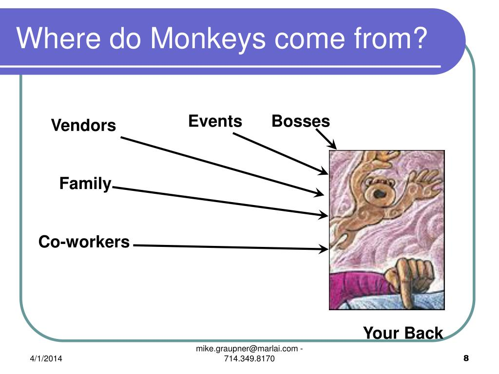 Where do Monkeys come from?