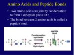 amino acids and peptide bonds