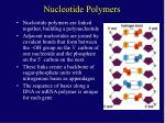 nucleotide polymers