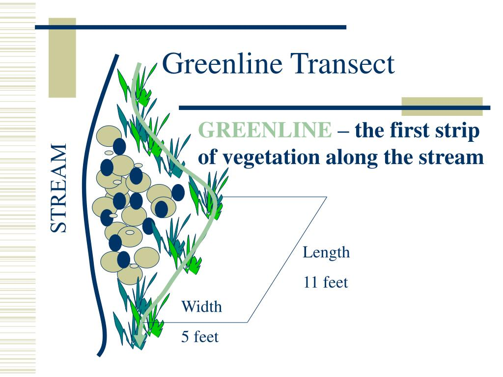 Greenline Transect