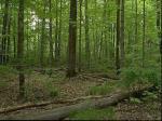 a minnesota forest comparison8