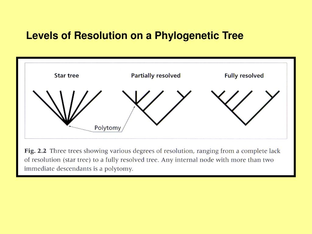 Levels of Resolution on a Phylogenetic Tree