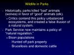 wildlife in parks