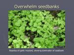 overwhelm seedbanks