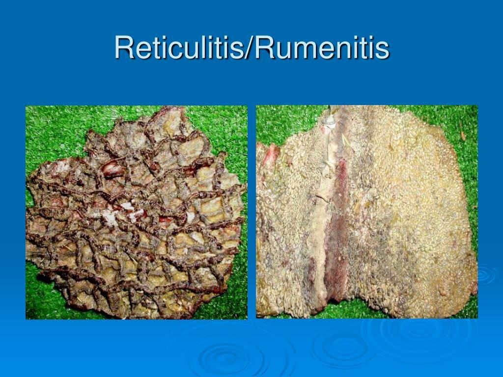 Reticulitis/Rumenitis