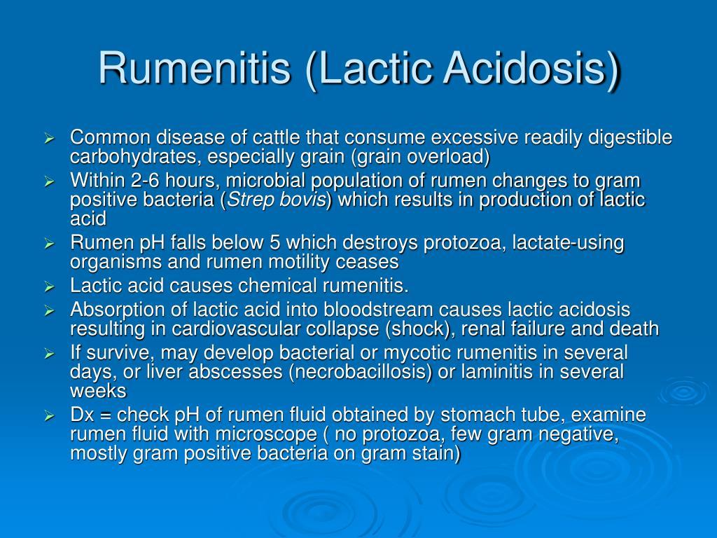 Rumenitis (Lactic Acidosis)