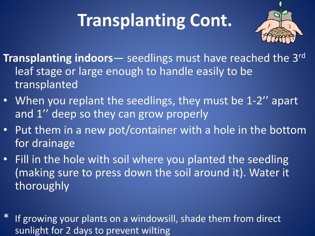 Transplanting Cont.