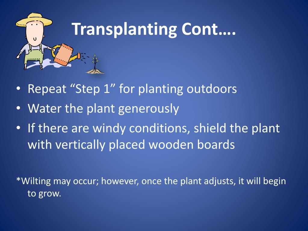 Transplanting Cont….
