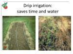 drip irrigation saves time and water