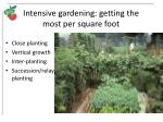 intensive gardening getting the most per square foot