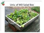 univ of md salad box