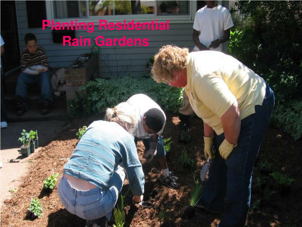 Planting Residential Rain Gardens