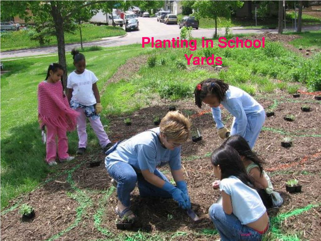 Planting in School Yards