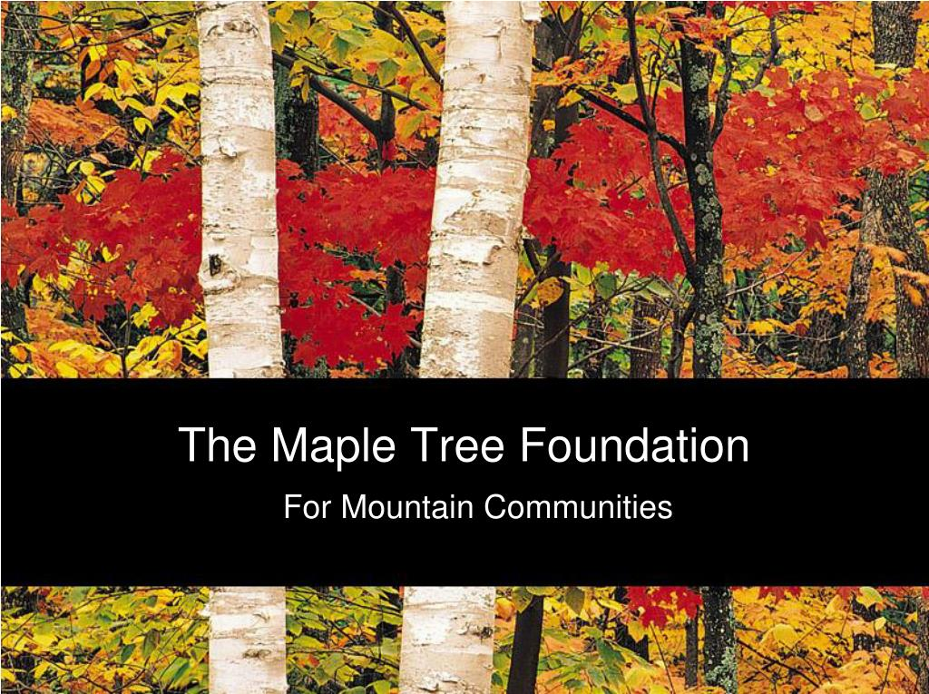 the maple tree foundation l.