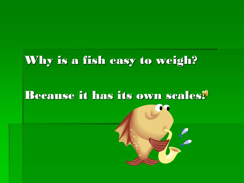 Why is a fish easy to weigh?