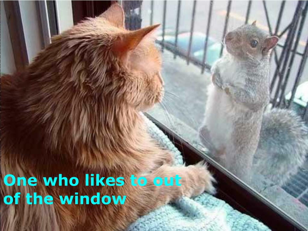 One who likes to out of the window
