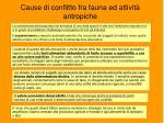 cause di conflitto fra fauna ed attivit antropiche
