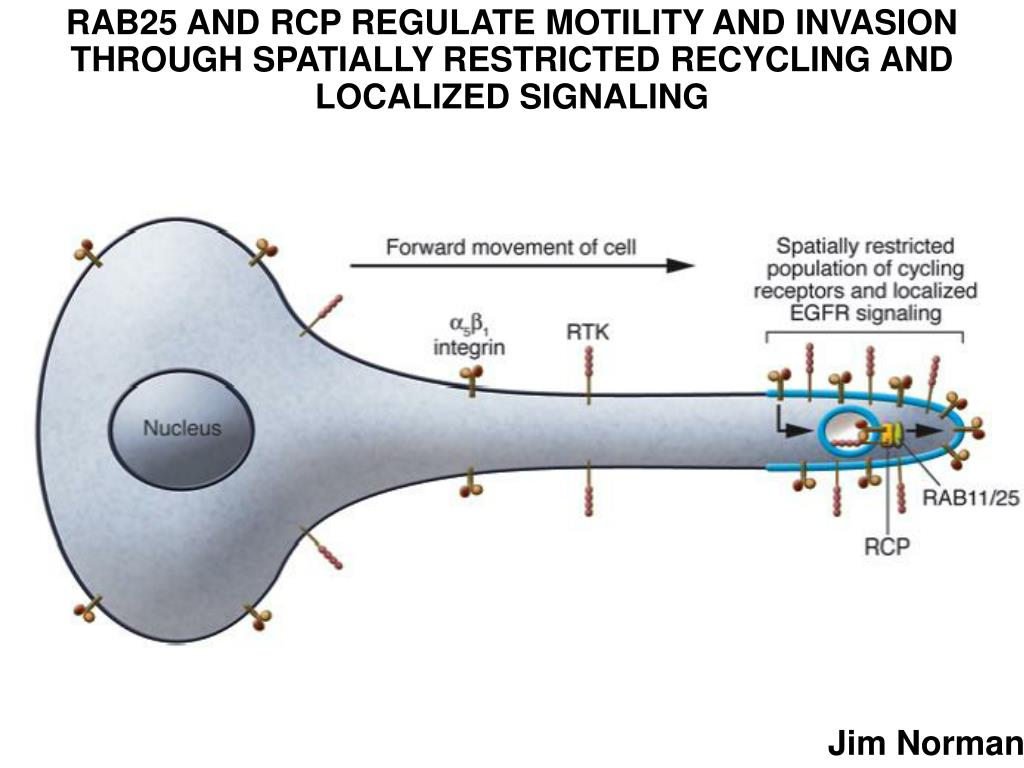 RAB25 AND RCP REGULATE MOTILITY AND INVASION THROUGH SPATIALLY RESTRICTED RECYCLING AND LOCALIZED SIGNALING