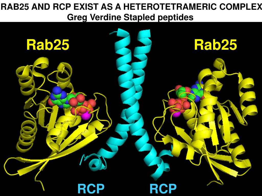 RAB25 AND RCP EXIST AS A HETEROTETRAMERIC COMPLEX