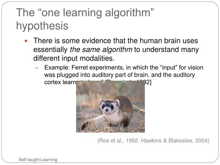 The one learning algorithm hypothesis