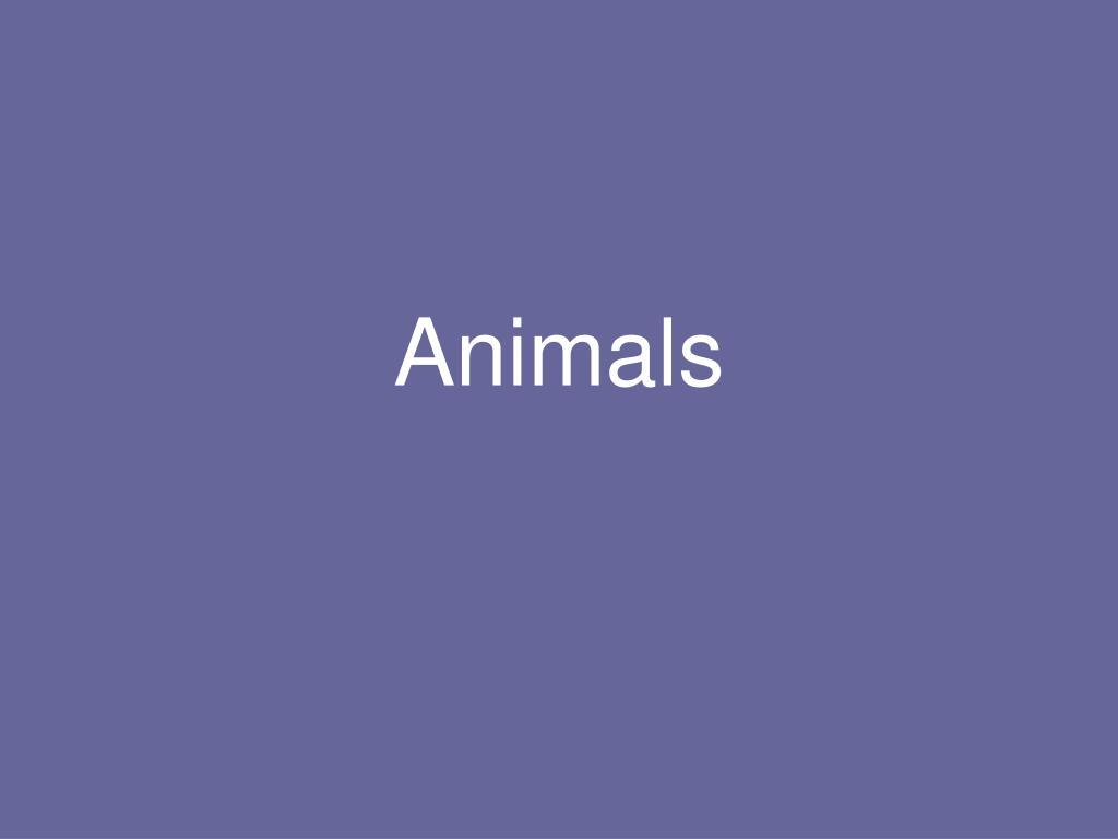 animals l.
