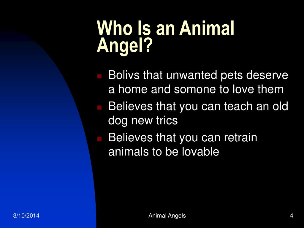 Who Is an Animal Angel?