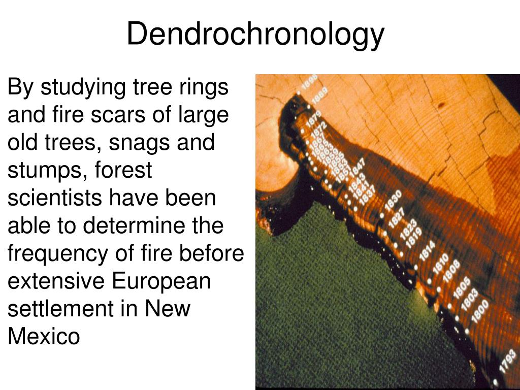 By studying tree rings and fire scars of large old trees, snags and stumps, forest scientists have been able to determine the frequency of fire before extensive European settlement in New Mexico