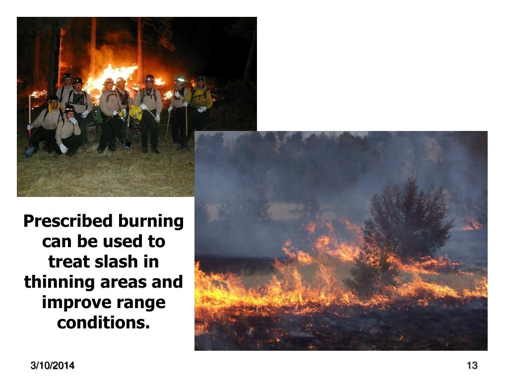 Prescribed burning can be used to treat slash in thinning areas and improve range conditions.