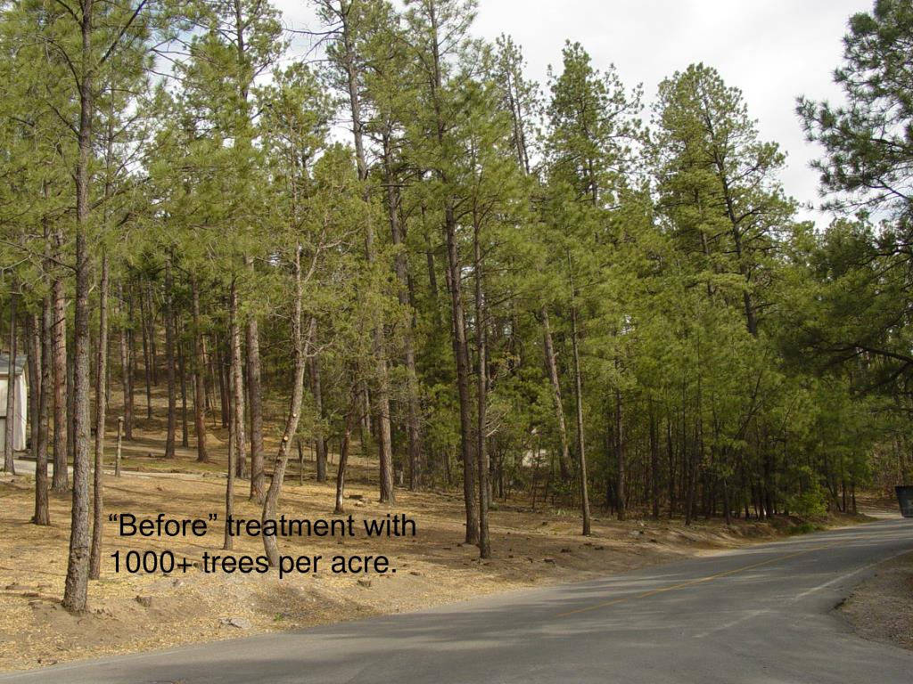 """""""Before"""" treatment with 1000+ trees per acre."""