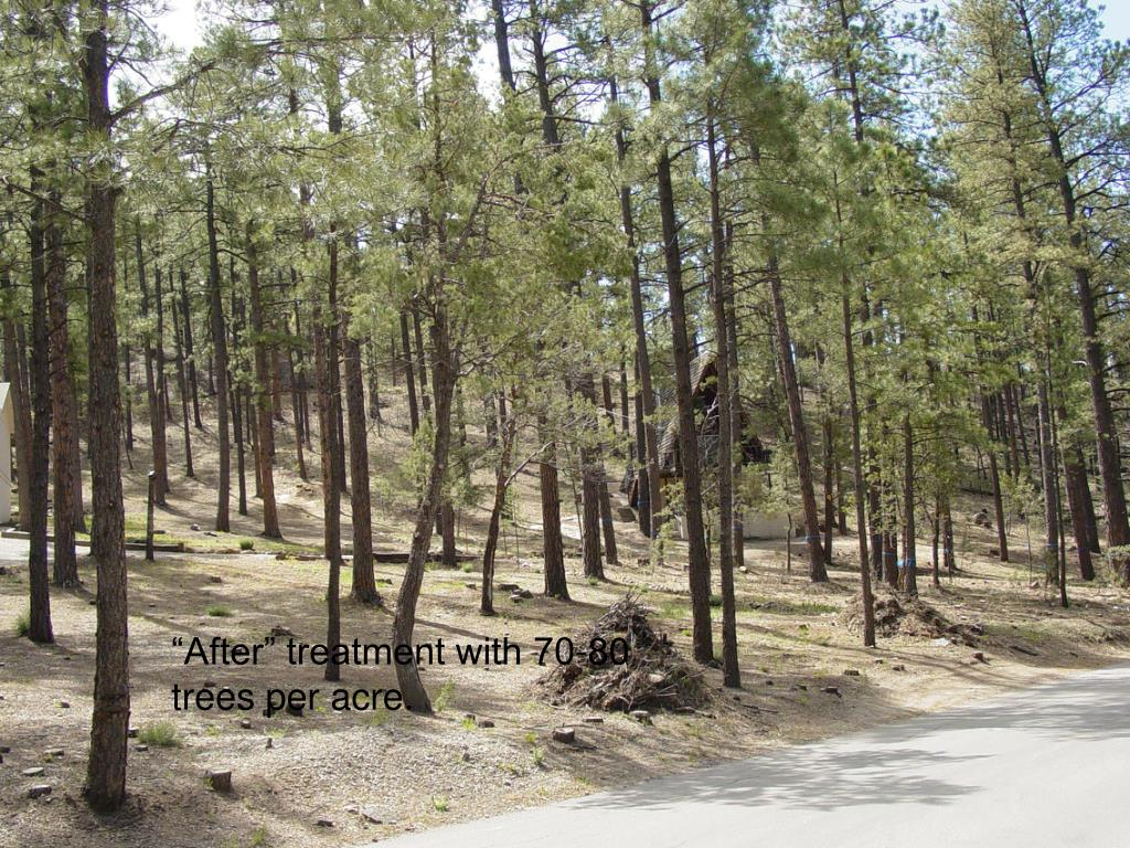 """""""After"""" treatment with 70-80 trees per acre."""