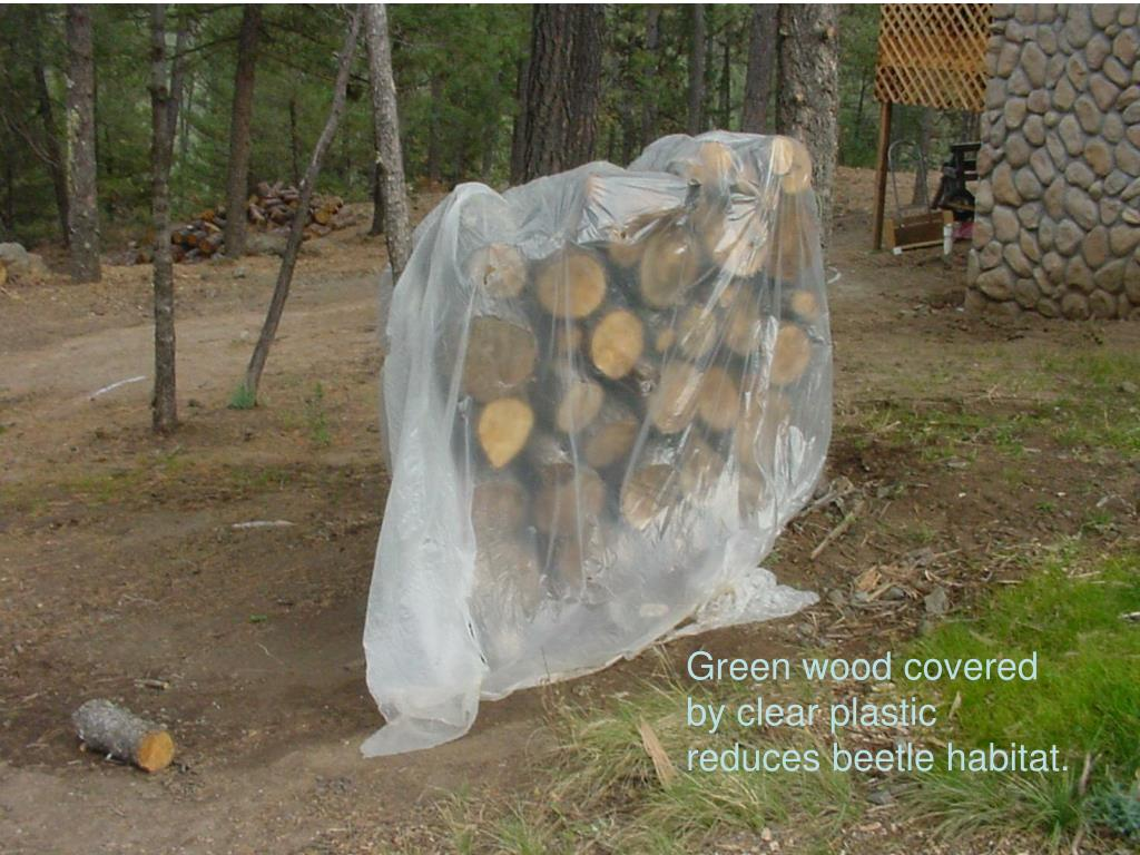 Green wood covered by clear plastic reduces beetle habitat.