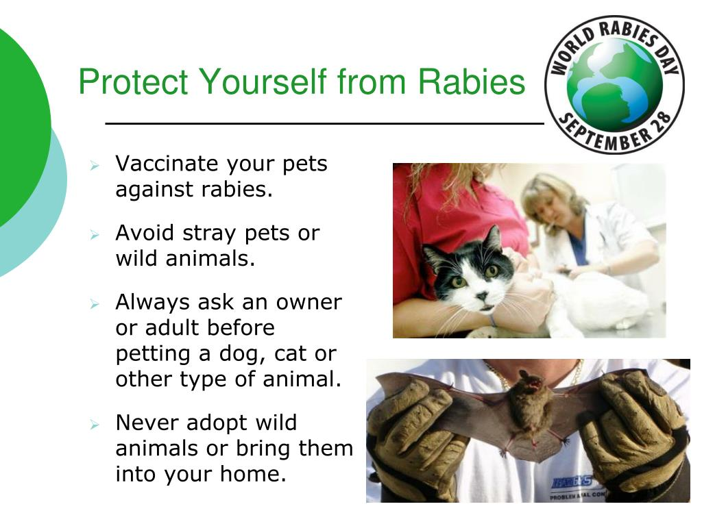 Protect Yourself from Rabies