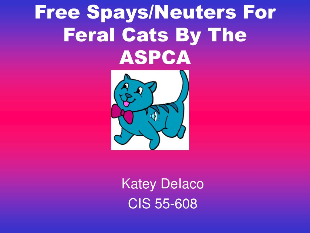 free spays neuters for feral cats by the aspca l.
