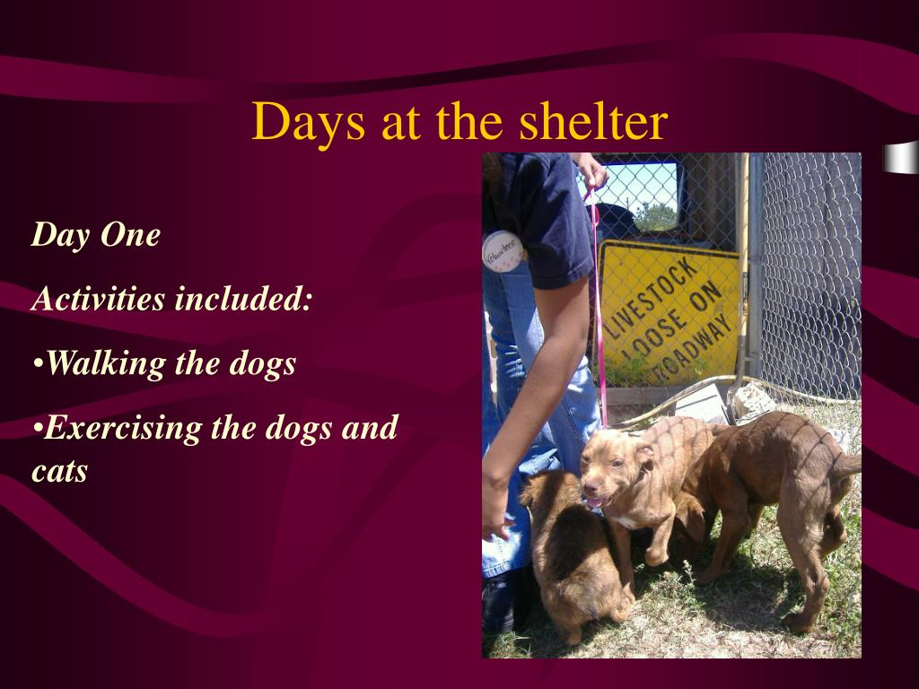 Days at the shelter