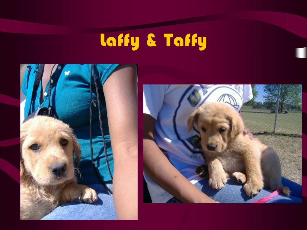 Laffy & Taffy