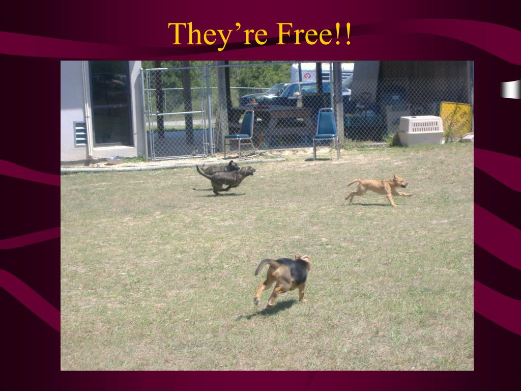They're Free!!