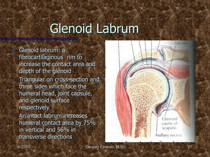 Glenoid labrum: a fibrocartilaginous  rim to increase the contact area and depth of the glenoid