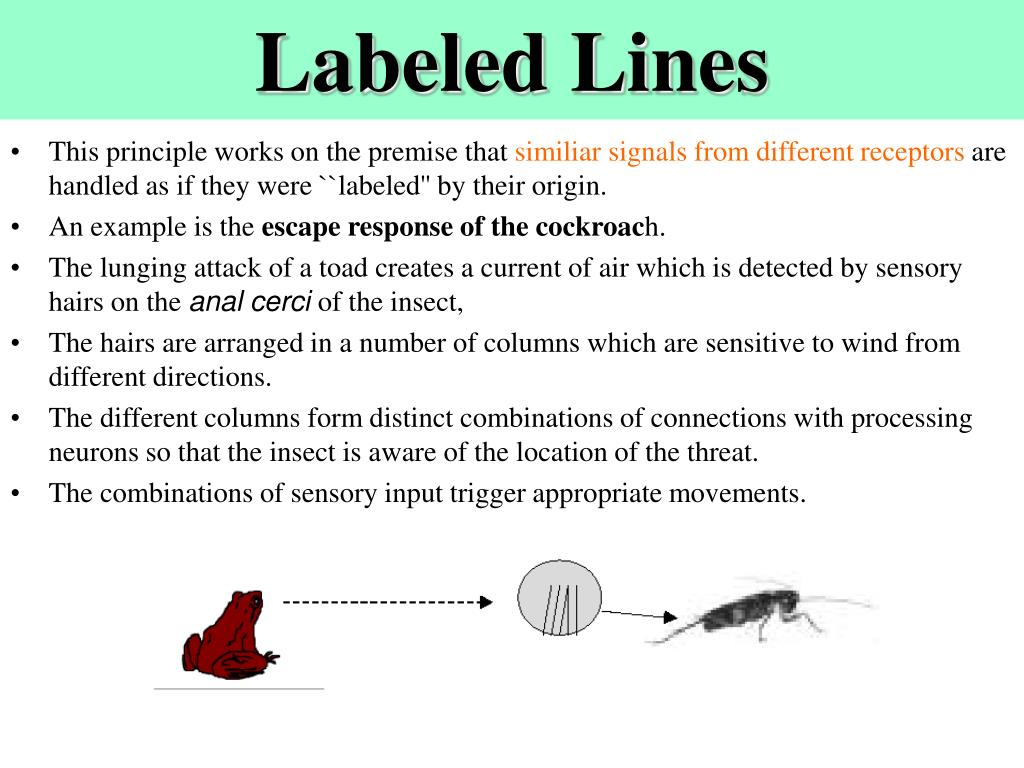 Labeled Lines