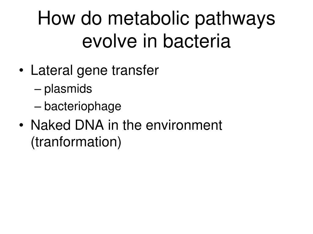 How do metabolic pathways evolve in bacteria