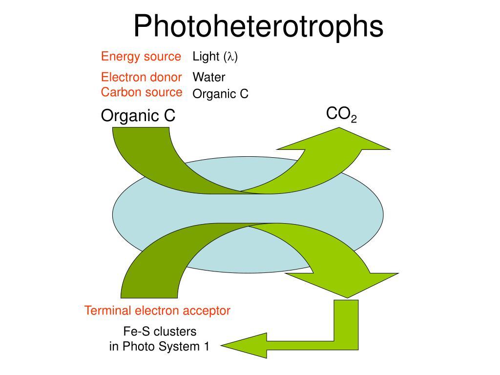 Photoheterotrophs