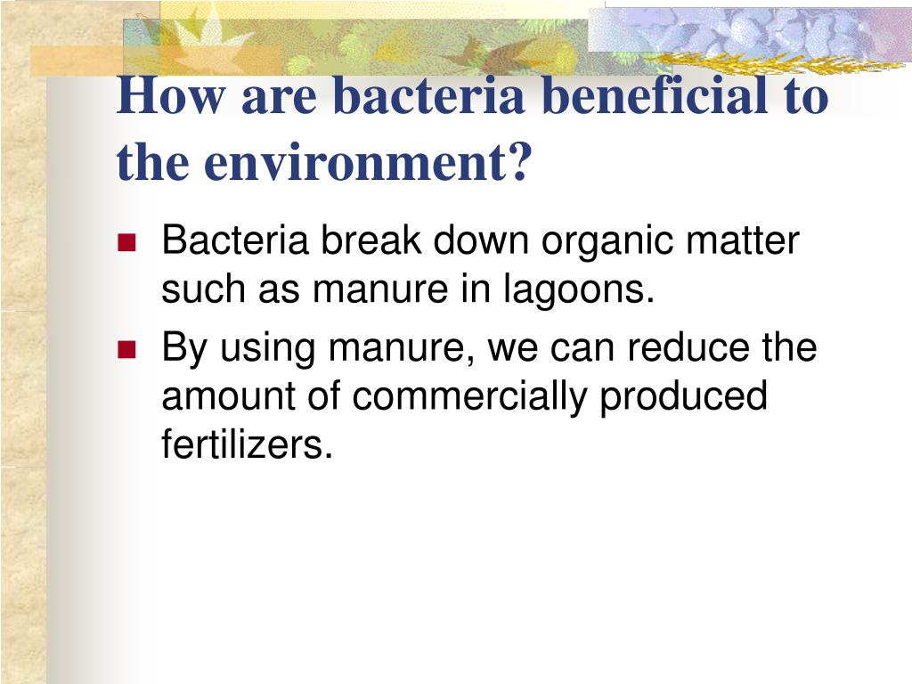 How are bacteria beneficial to the environment?