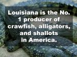 louisiana is the no 1 producer of crawfish alligators and shallots in america