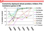 comomnly deployed wheat powdery mildew pm resistance genes in nc