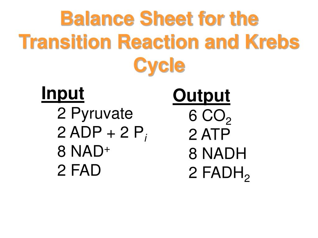 Balance Sheet for the Transition Reaction and Krebs Cycle